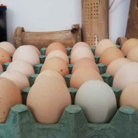 30 huevos orgánicos producto de gallinas criollas, libres de antibióticos, criadas en pastoreo permanente.