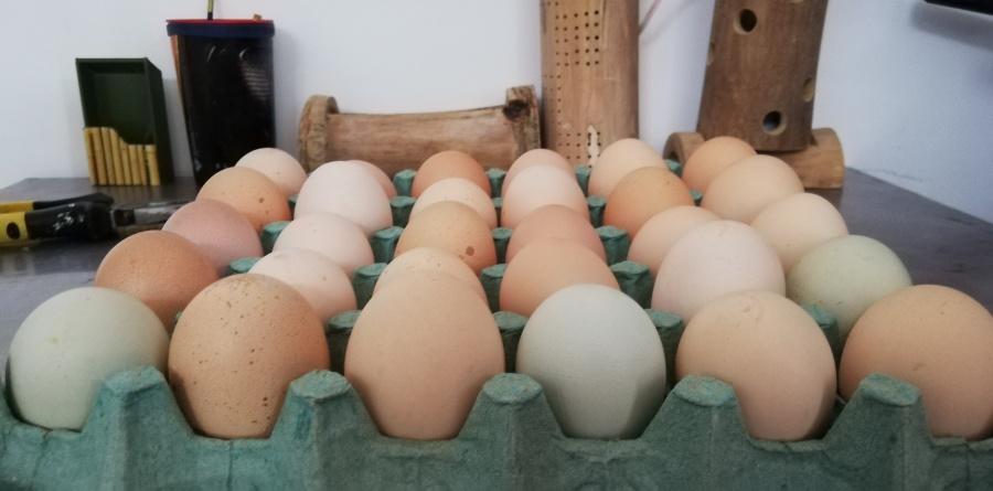 Cubeta 30 huevos organicos