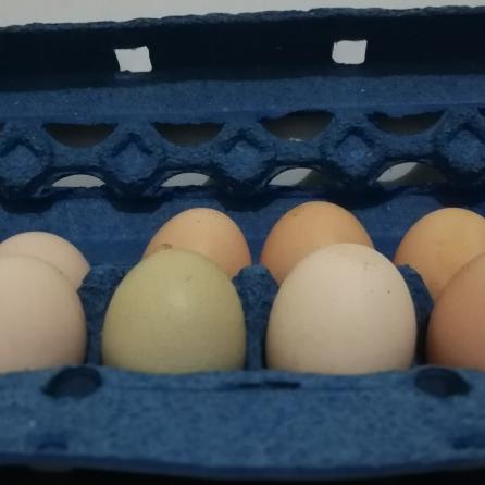 12 huevos orgánicos producto de gallinas criollas, libres de antibióticos, criadas en pastoreo permanente.