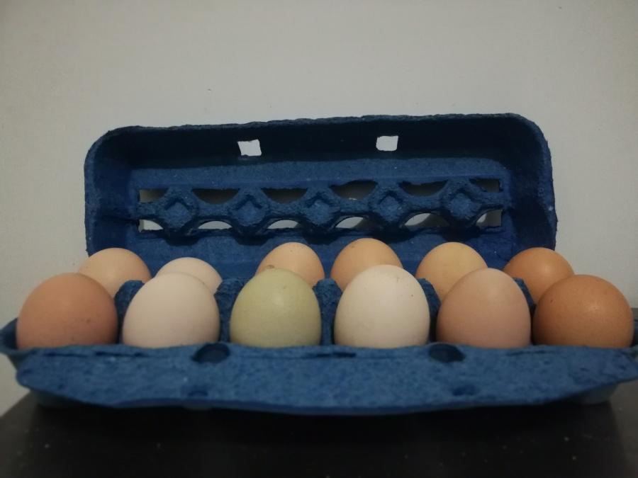 Estuche de 12 huevos organicos