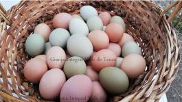 canasta de huevos